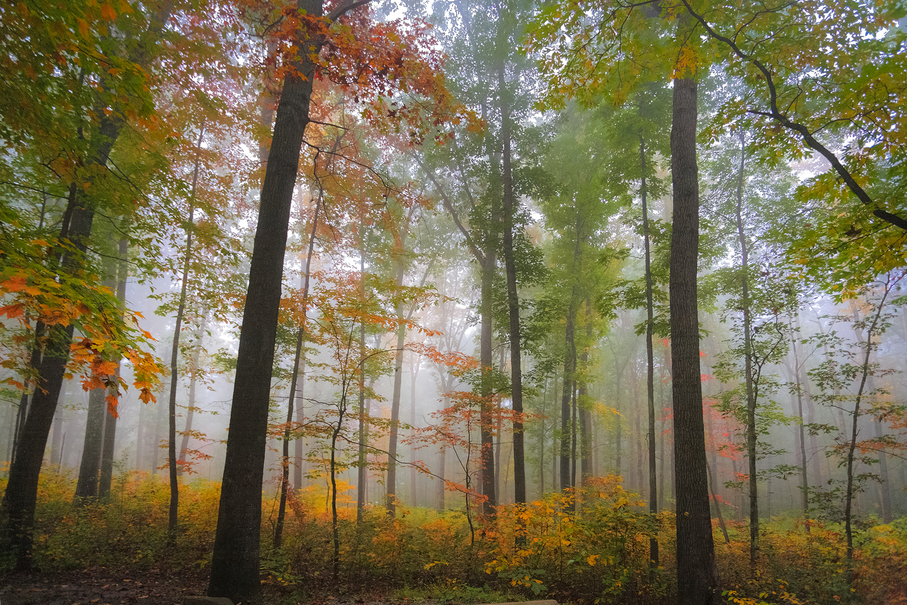 Morning in Ohiopyle by Jim Meehan, Westmoreland Photographers Society.